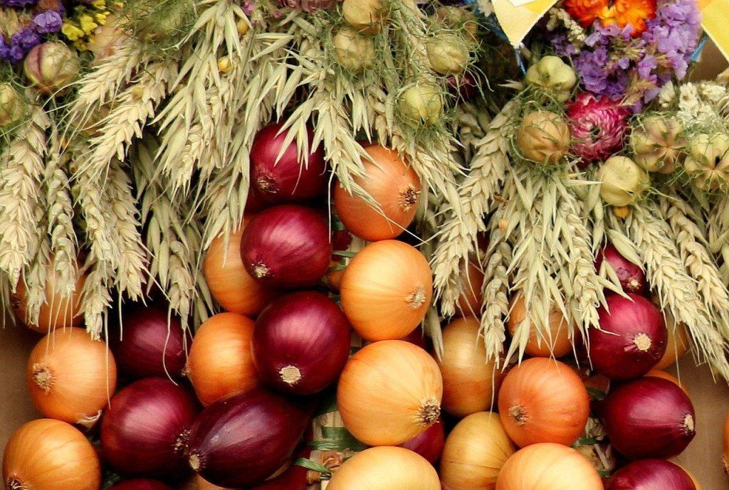 onion, vegetables, composition